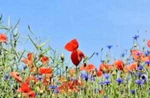 tipos de jardines - jardin de flores